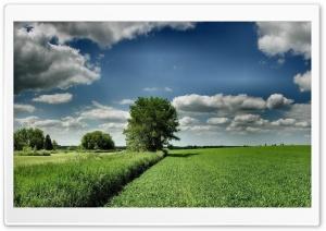 Field Tree Cloud Blue Sky