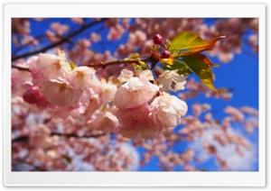 The Spring Beginning