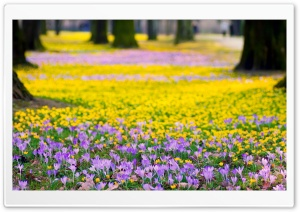 Spring Flowers Meadow