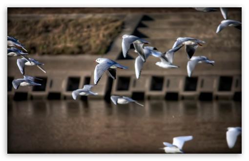 Download Gulls, Japan UltraHD Wallpaper