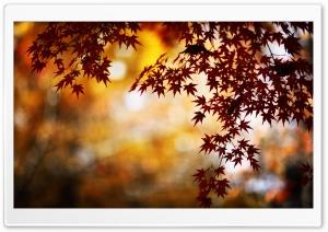 Red Foliage, Bokeh