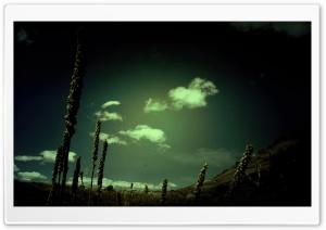 Green Light 14