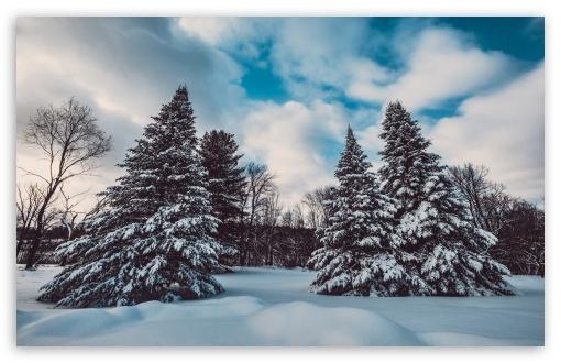 Download Winter, Snow, Pine Trees, Landscape, Nature UltraHD Wallpaper
