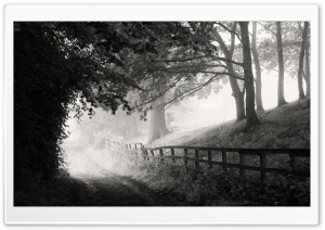 Foggy Morning, Road, Black...