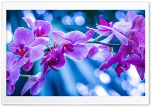 Violet Flowers With Bokeh