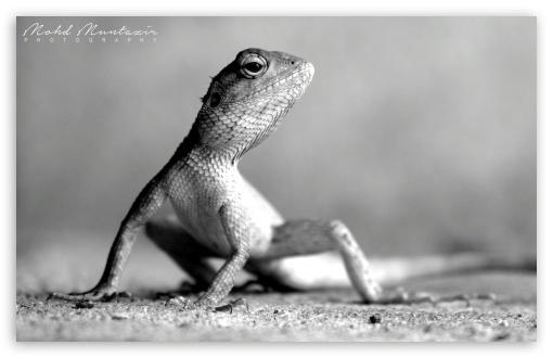 Download Lizard Pose UltraHD Wallpaper