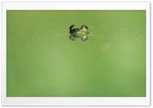 Frog Eyes, Green Lake