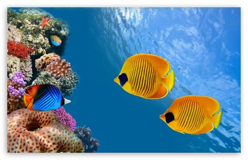 Download Desktop Aquarium UltraHD Wallpaper