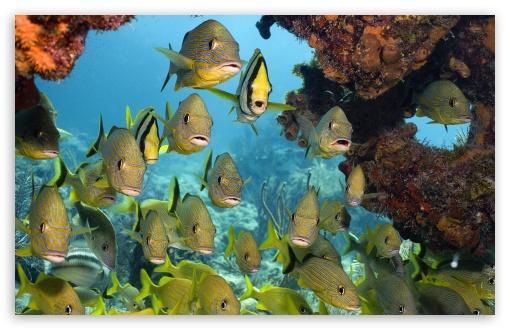 Download Tropical Fish UltraHD Wallpaper