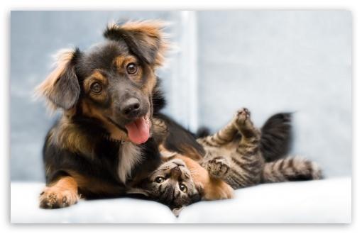 Download Dog And Cat Friendship UltraHD Wallpaper
