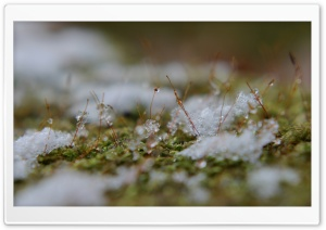 Snowflakes On Moss