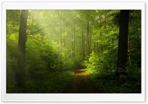 Beautiful Nature Image, Green...