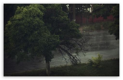 Download Rainy Day UltraHD Wallpaper