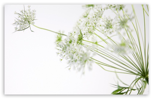 Download Flower UltraHD Wallpaper