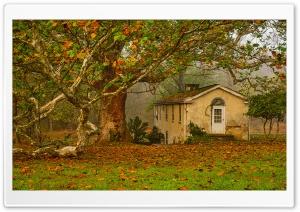 Autumn, Leaves, Big Tree, Old...