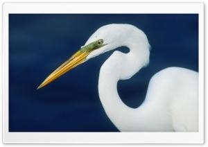 Perfect Form Egret