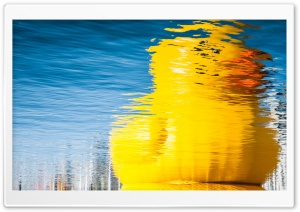 Rubber Duck Reflection
