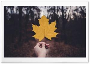 Holding Yellow Maple Leaf,...