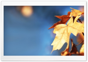 Fall Foliage Against The Blue...