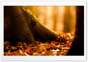 Fallen Leaves Covering The...