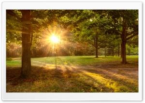 Sun Shining, Golden, Trees,...