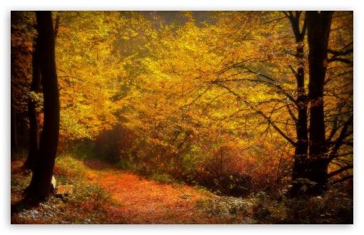 Download Forest Alley, Autumn UltraHD Wallpaper