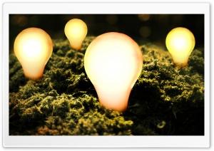 Bulbs Lit