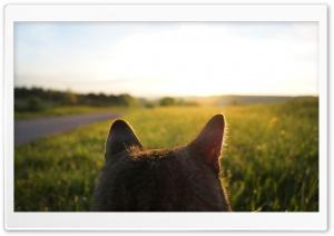 Cat Looking at Sunrise