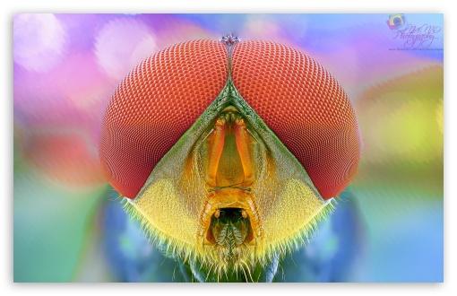Download BEE MACRO UltraHD Wallpaper
