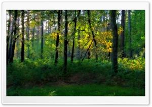 Nature Landscape 41