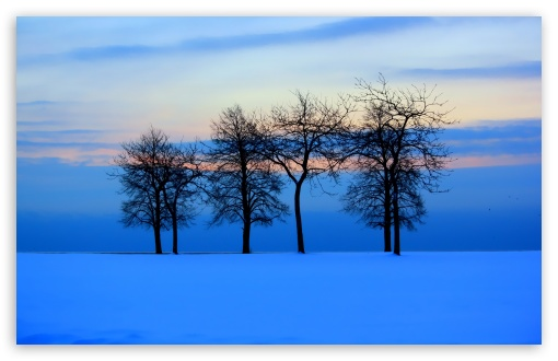 Download Trees Skyline UltraHD Wallpaper
