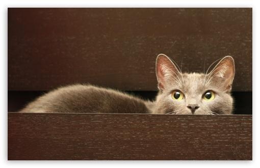 Download Cat In A Drawer UltraHD Wallpaper