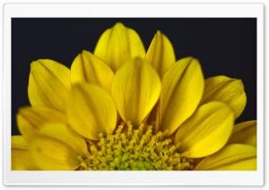 Half Flower