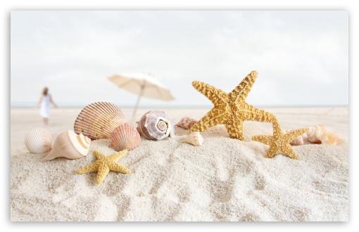 Download Seashells And Starfish On The Beach UltraHD Wallpaper