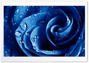 Wet Drops Blue Rose