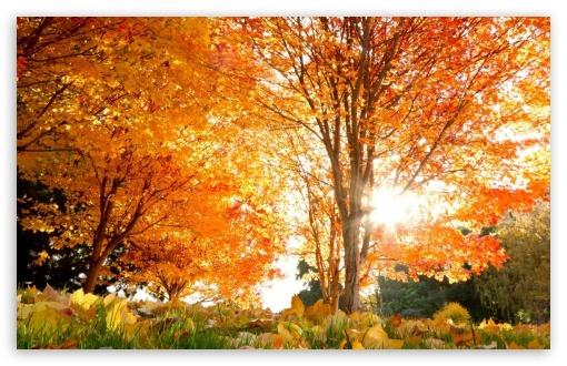 Download Golden Autumn In Park UltraHD Wallpaper