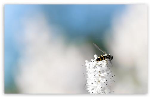 Download It Is A Bee UltraHD Wallpaper