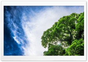 Green Tree, Sun, Blue Sky