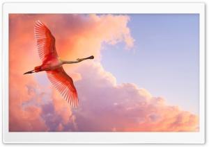 Beautiful Birds Flying