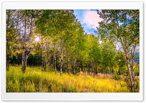 Aspen Grove Backlighting