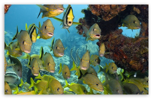 Download Florida Keys National Marine Sanctuary UltraHD Wallpaper
