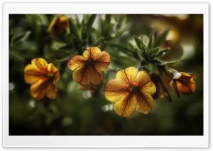 Orange Flowers Close-up