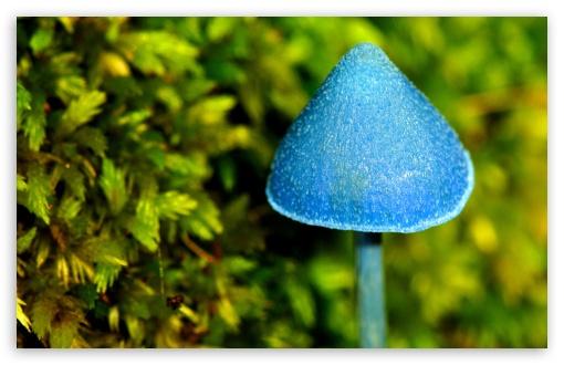Download Blue Mushroom UltraHD Wallpaper