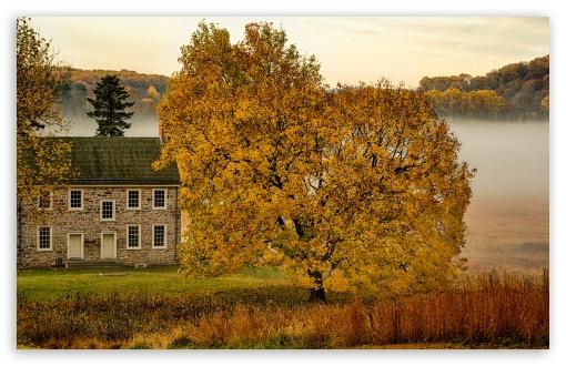 Download Yellow Tree, House, Mist, Autumn UltraHD Wallpaper