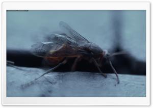 Wasp wallpapers ART.IRBIS...