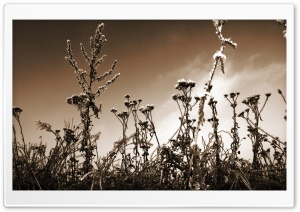 Sepia Wildflowers