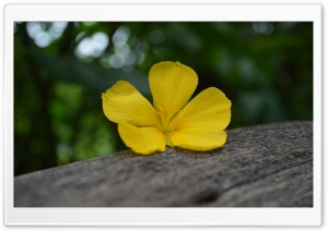 Flower on the Timber