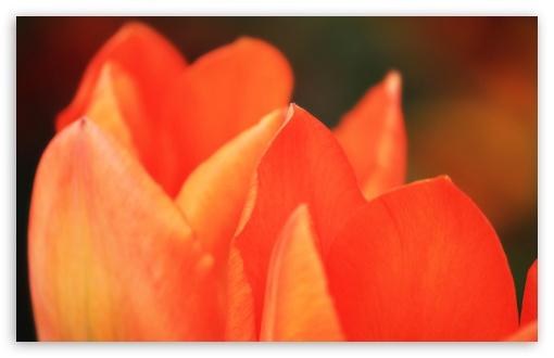 Download Flower Bokeh UltraHD Wallpaper