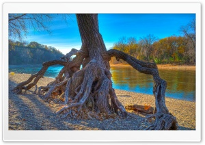Rooted, Mississippi River at...