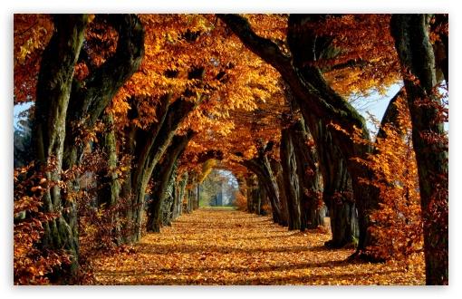 Download Beautiful Path UltraHD Wallpaper
